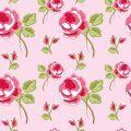 Pink Red Rose