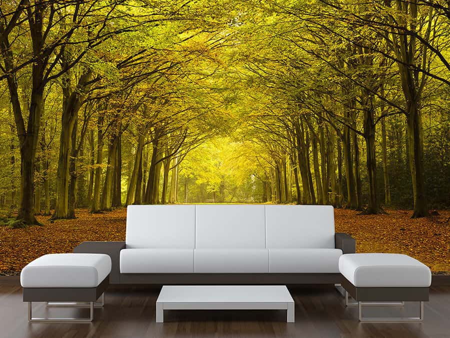 Arching Trees Wall Mural