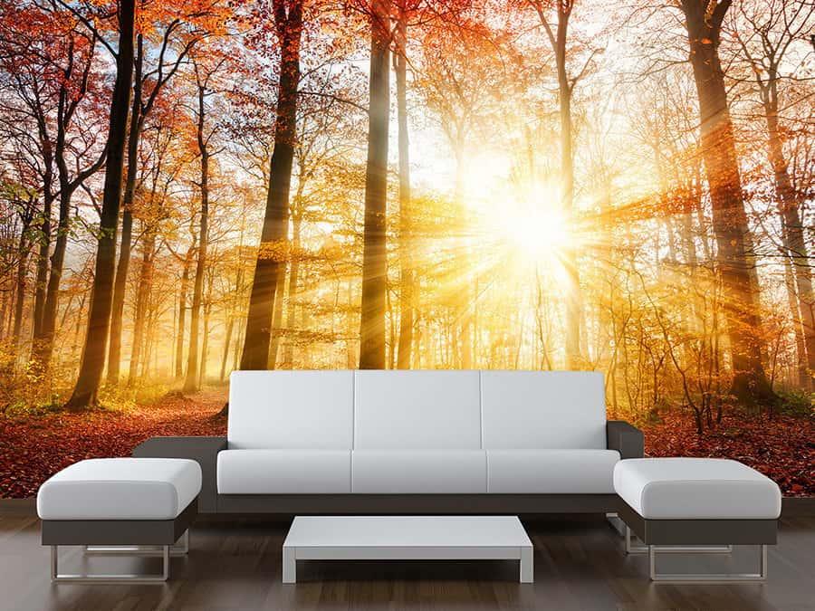Autumn Trees Sunbeam Wall Mural