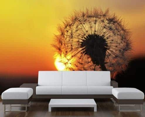 Dandelion Sunset Wall Mural