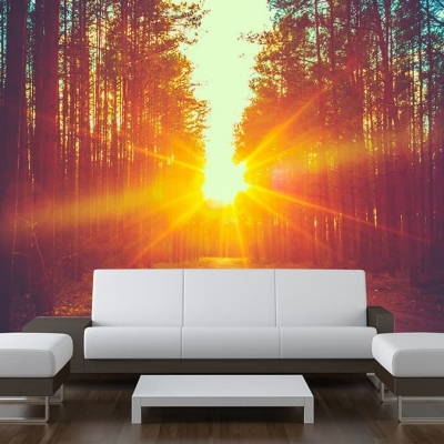 Sunrise Forest Wall Mural