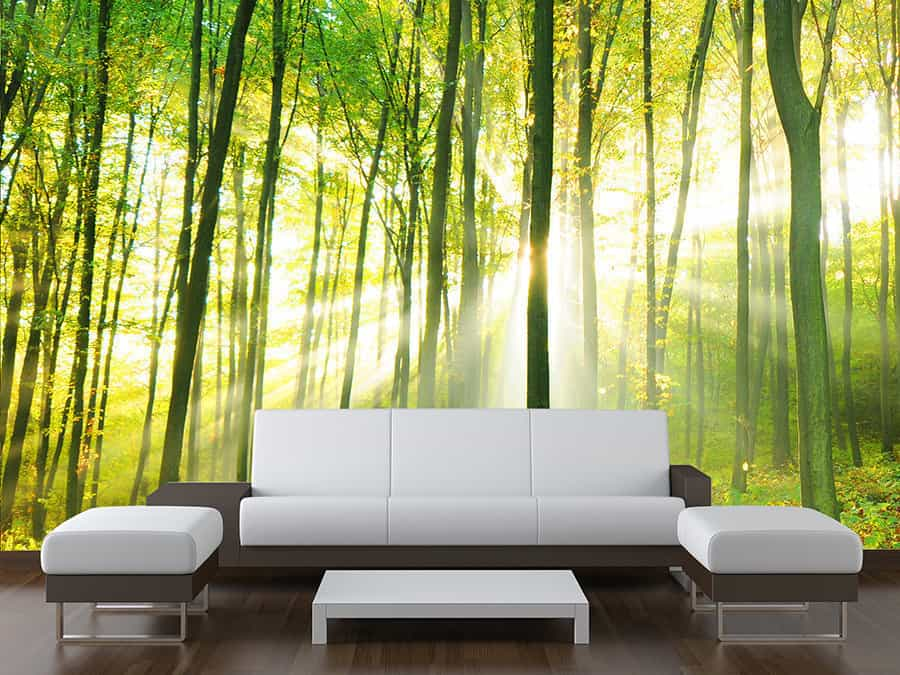 Sunny Forest Trees Wall Mural