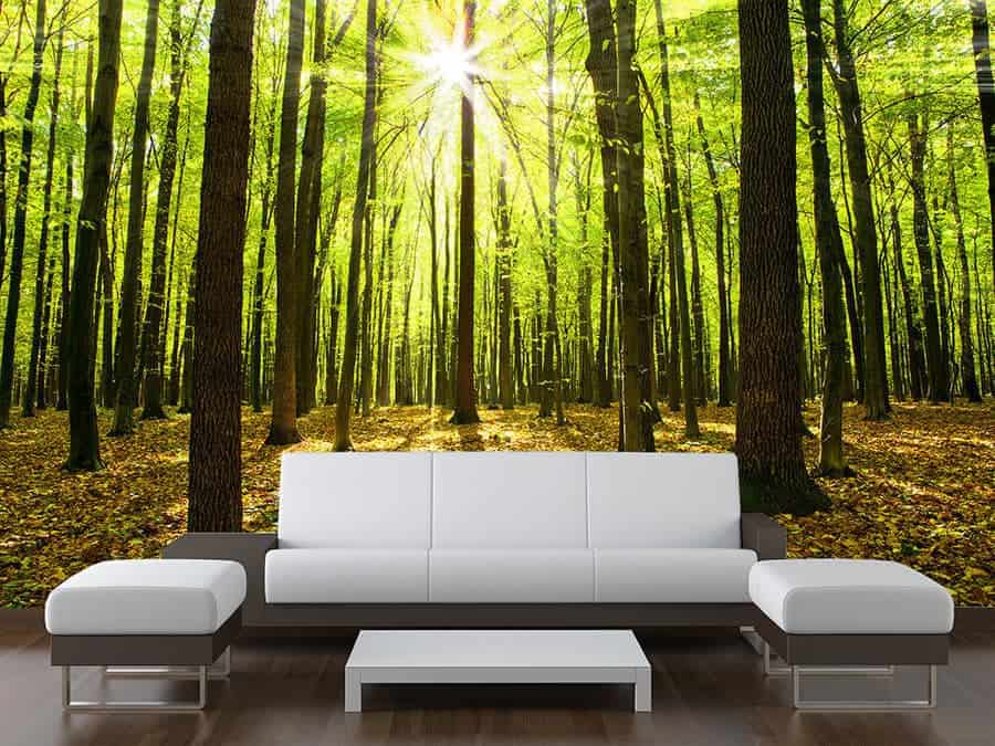 Forest Trees Sunbeam Wall Mural