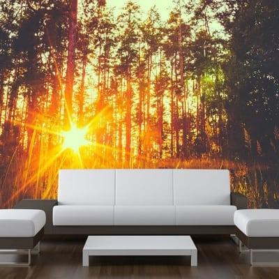 Sunbeam Trees Wall Mural