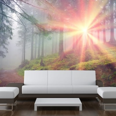 Sunbeam Forest Trees Wall Mural