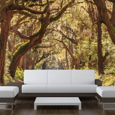Forest Trees Arching Wall Mural